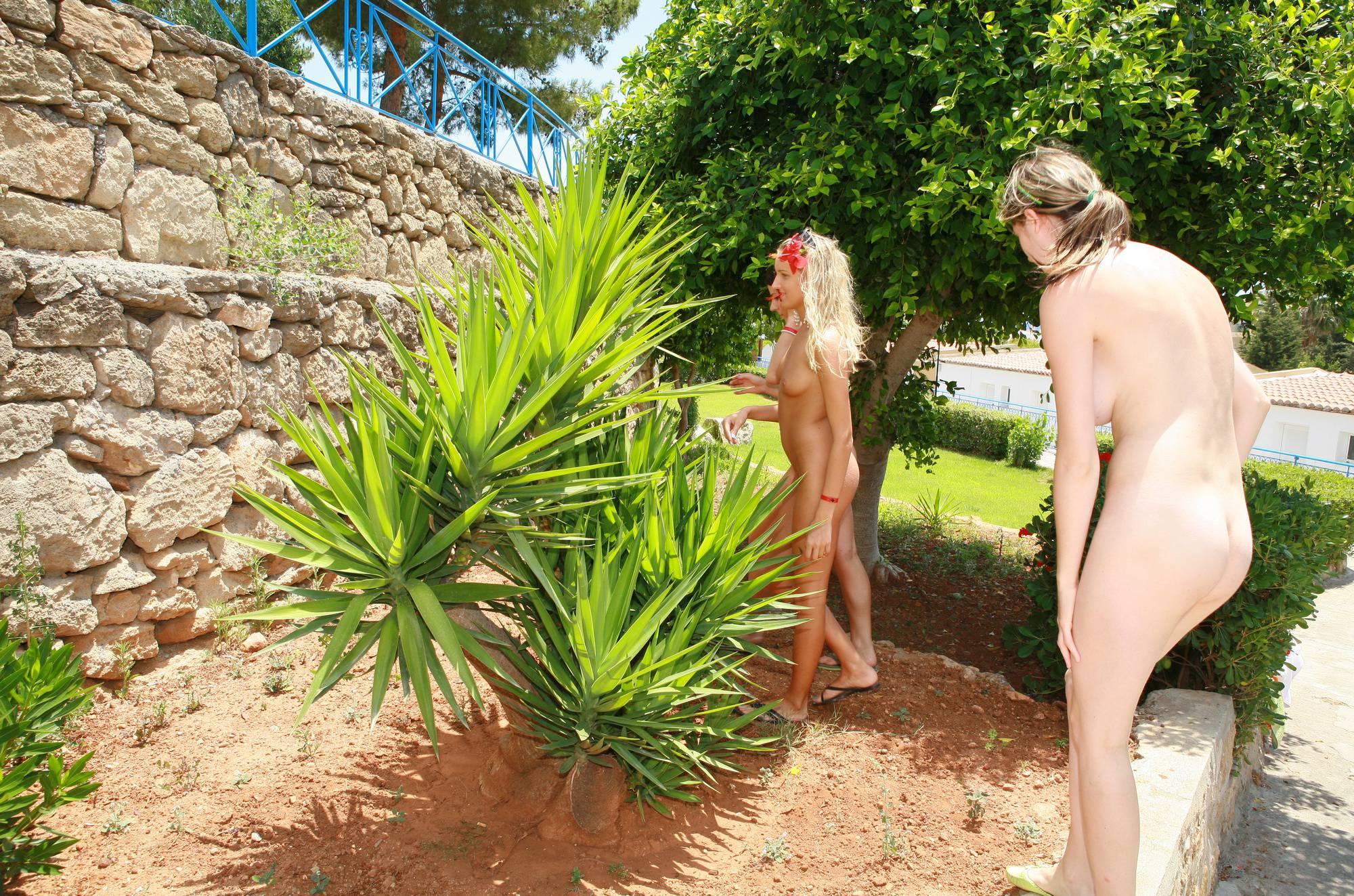 Nudist Photos Greek Palm Tree Paradise - 2